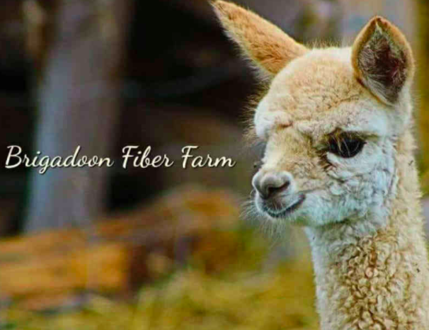 Brigadoon Fiber Farm